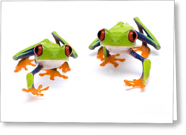 Red-eyed Treefrogs Walking Greeting Card by Mark Bowler and Photo Researchers
