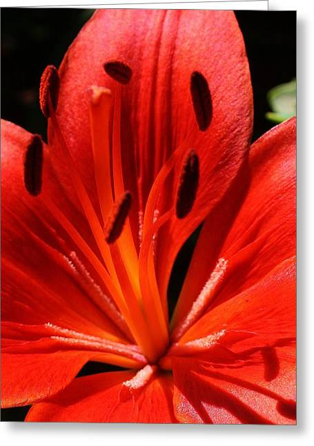 Red Flame Greeting Card by Bruce Bley