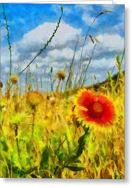 Red Flower In The Field Greeting Card by Jeff Kolker