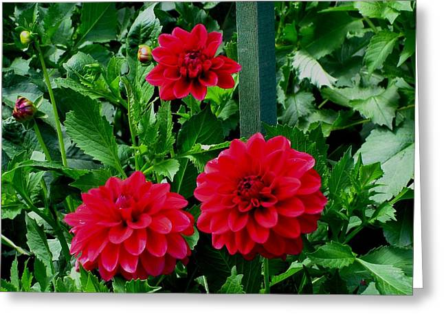 Red Flowers Greeting Card by Kathy Long