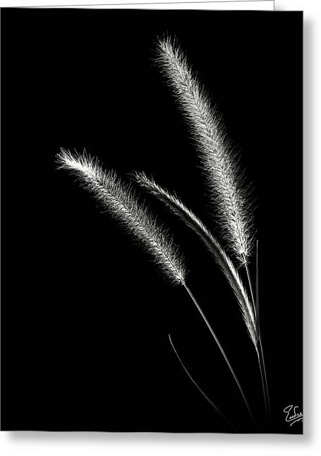 Red Fountain Grass In Black And White Greeting Card
