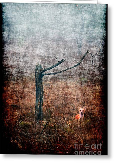 Greeting Card featuring the photograph Red Fox Under Tree by Dan Friend