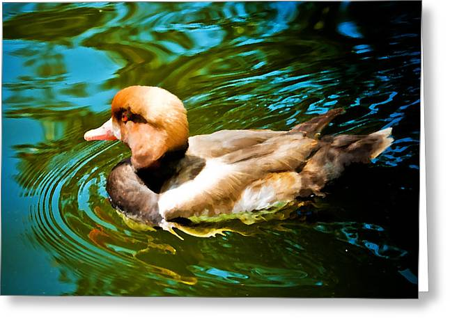 Red Head Duck Greeting Card by Mickey Clausen