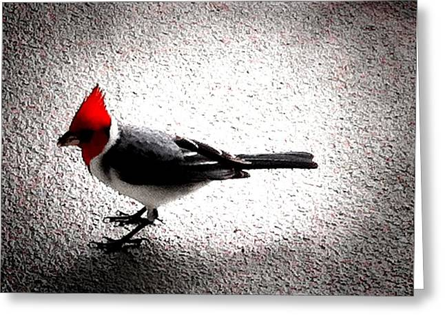Red Head Greeting Card by Ken Riddle