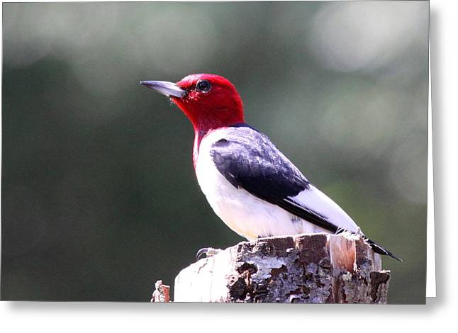 Red-headed Woodpecker - Statue Greeting Card