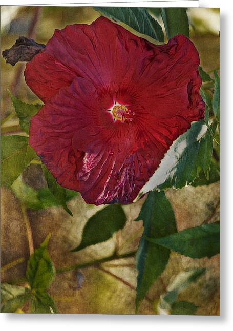 Red Hibiscus Greeting Card by Bonnie Bruno