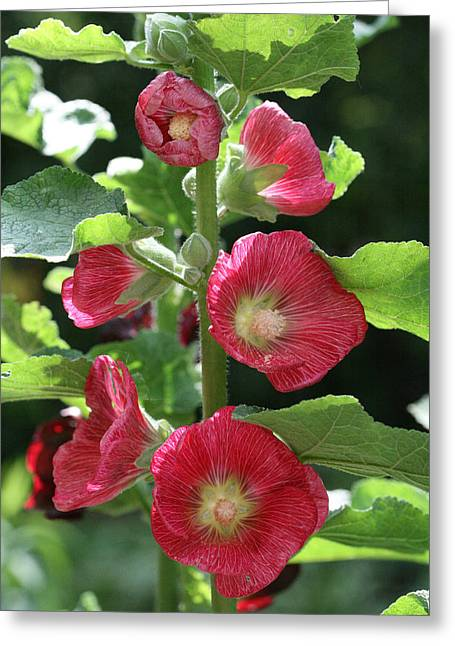 Greeting Card featuring the photograph Red Hollyhocks by Peg Toliver