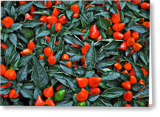 Red Hots Greeting Card by Mary Machare