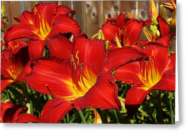Red Hots Return Greeting Card by Bruce Bley