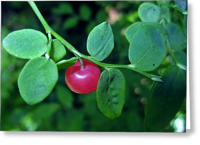 Red Huckleberry Greeting Card by Ami Tirana
