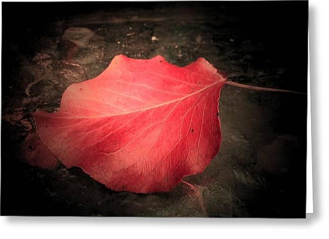 Red Leaf  Greeting Card by Beth Akerman