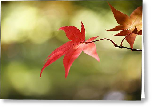 Red Leaf. Greeting Card by Clare Bambers