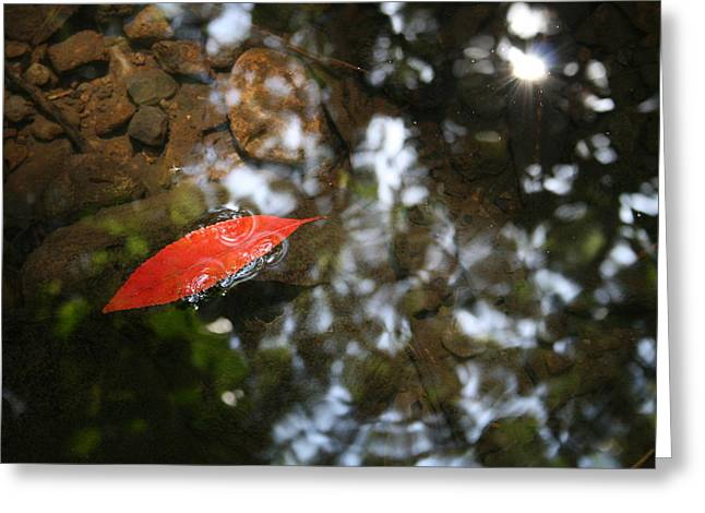 Red Leaf In The Water Greeting Card