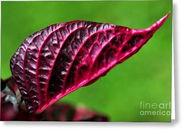 Red Leaf Greeting Card by Kaye Menner