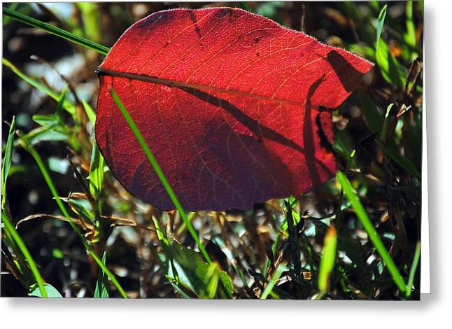Red Leaf On Green Greeting Card