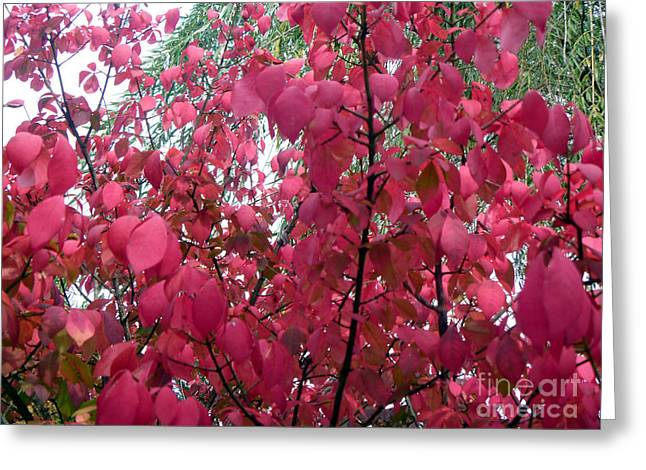 Red Leaves I Greeting Card by Alys Caviness-Gober