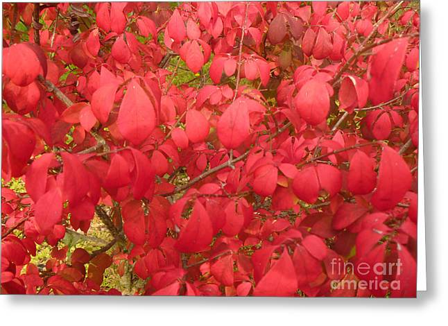 Red Leaves Iv Greeting Card by Alys Caviness-Gober