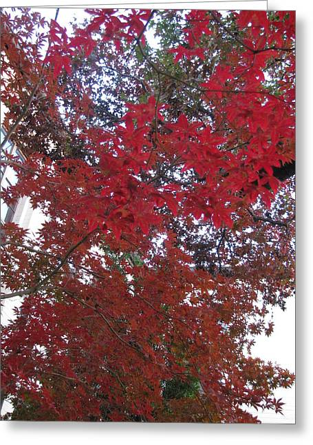 Red Leaves Of Windsor Greeting Card by Shawn Hughes