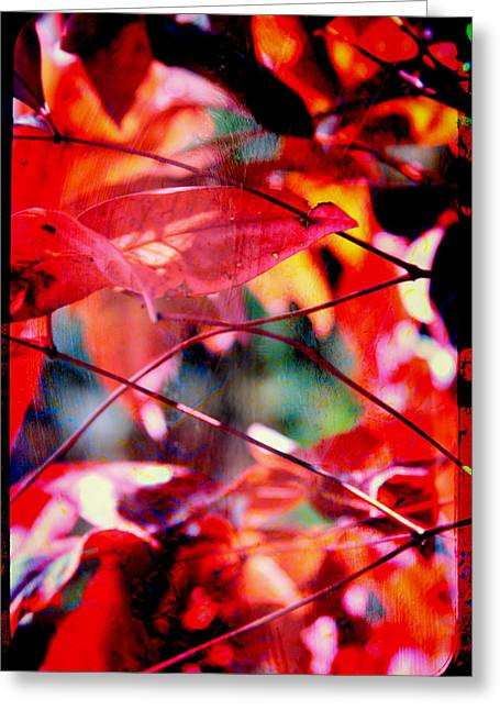 Red Leaves Greeting Card by Toni Hopper