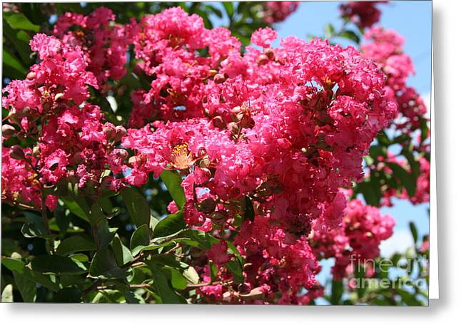 Greeting Card featuring the photograph Red Lilac Bush by Michael Waters