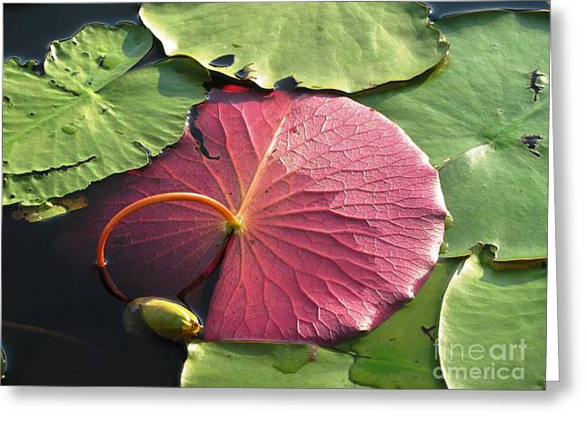 Red Lily Pad Greeting Card