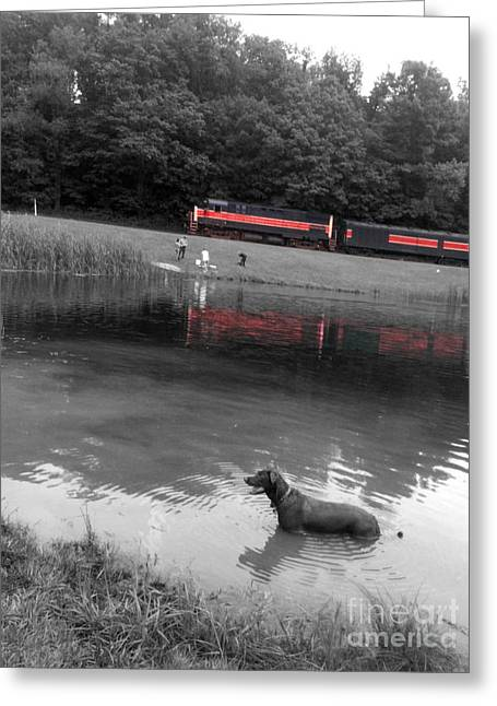 Red Line Greeting Card by Trish Hale