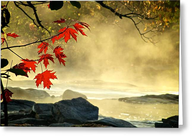 Red Maple Leafs In Fog Greeting Card