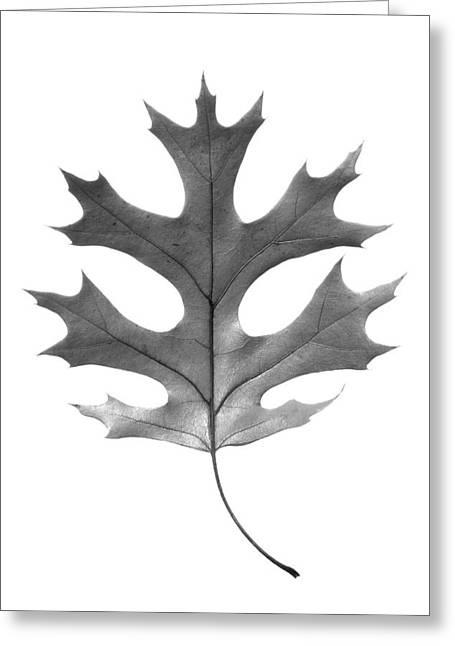 Red Oak Leaf Greeting Card