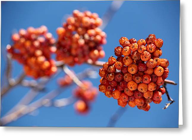 Red Orange Blue Greeting Card