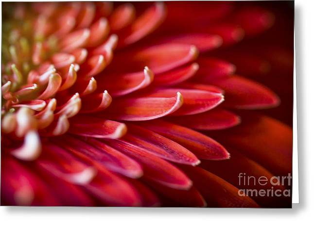 Red Petals Abstract 1 Greeting Card
