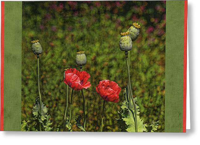 Red Poppies Greeting Card by Bonnie Bruno