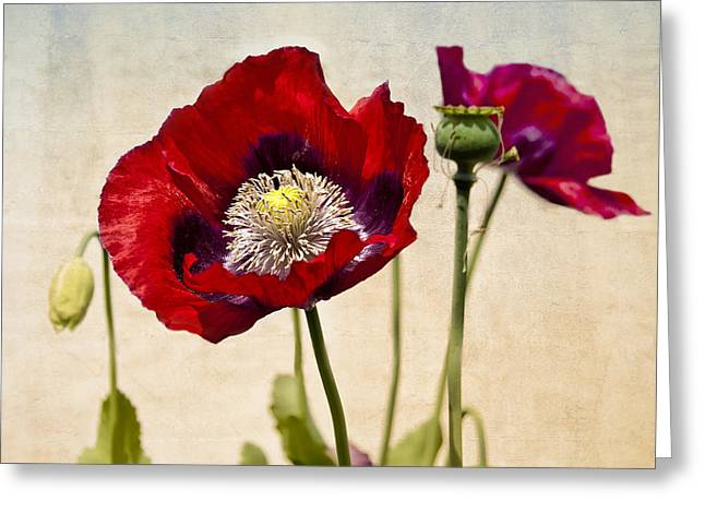 Red Poppies Greeting Card by Marion McCristall