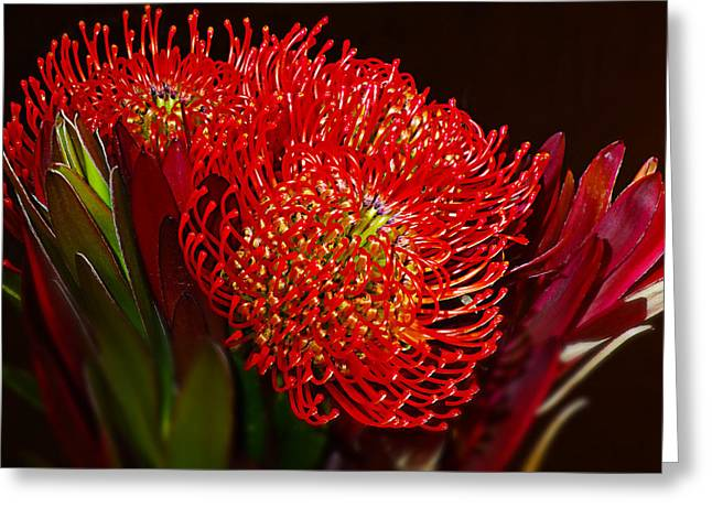 Red Protea Flower Greeting Card by Michelle Armstrong