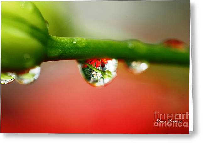 Greeting Card featuring the photograph Red Raindrops by Yumi Johnson