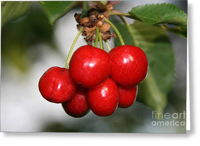 Red Ripe Cherries Greeting Card by Joan McArthur