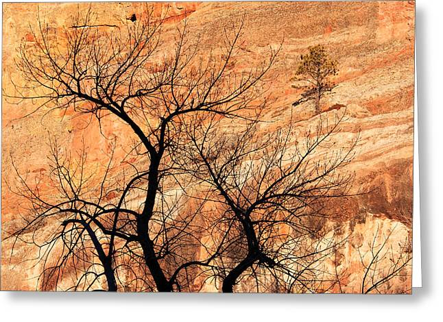 Red Rocks And Trees Greeting Card by Adam Pender