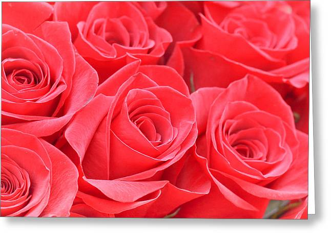 Red Roses Greeting Card by Tom Gowanlock