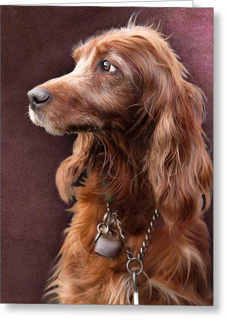 Greeting Card featuring the photograph Red Setter Dog Portrait by Ethiriel  Photography