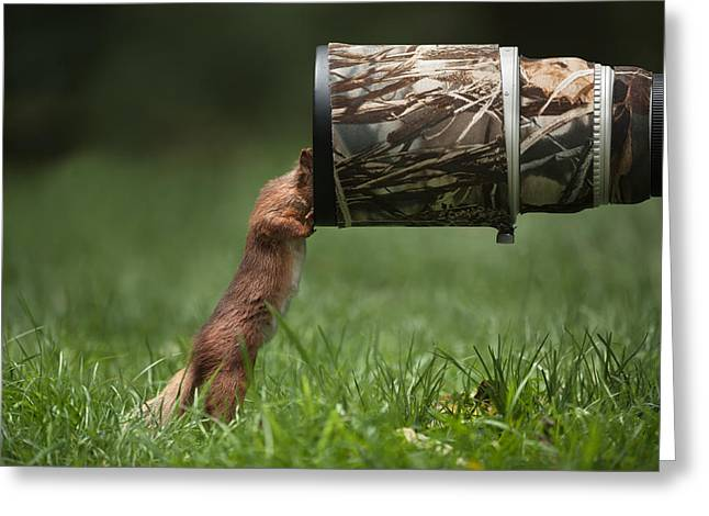 Red Squirrel Inspecting A Camera Lens. Greeting Card by Andy Astbury