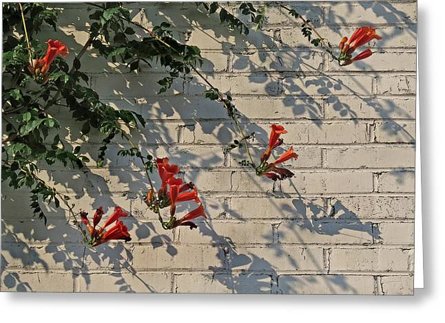Greeting Card featuring the photograph Red Summer Trumpets by Deborah Smith