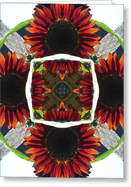 Red Sunflower And Feather Greeting Card