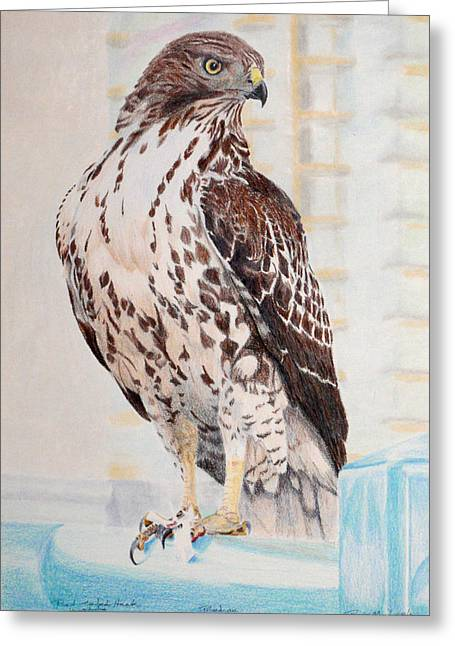 Red-tailed Hawk Greeting Card by Ross Michaels