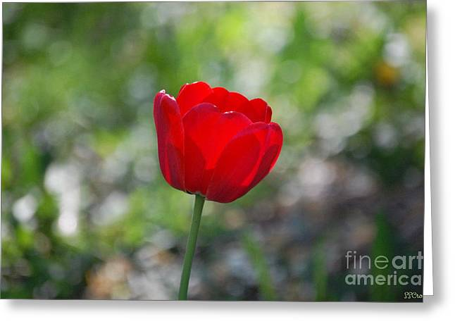 Only But A Single Tulip Greeting Card