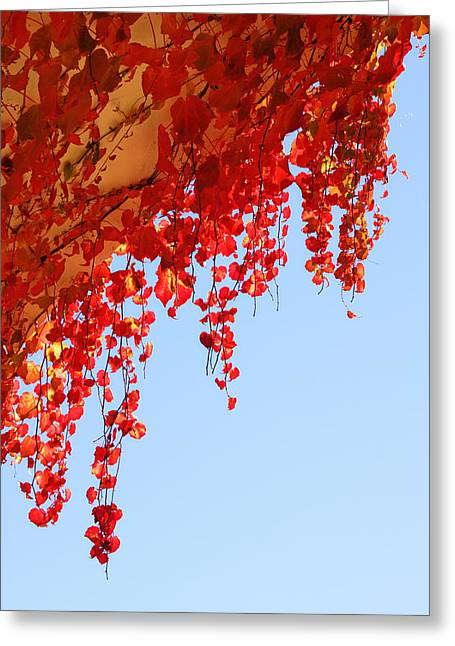Red Vine Greeting Card