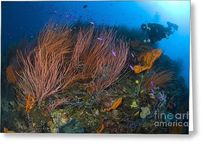 Red Whip Fan Coral With Diver Greeting Card