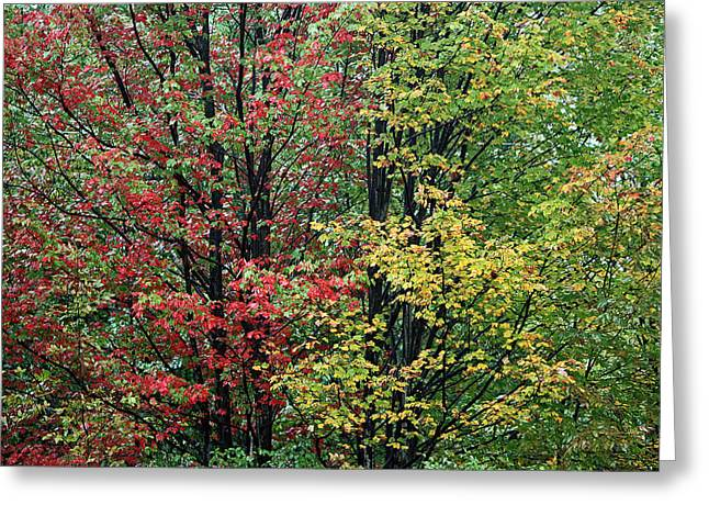 Red Yellow And Green Leaves Greeting Card