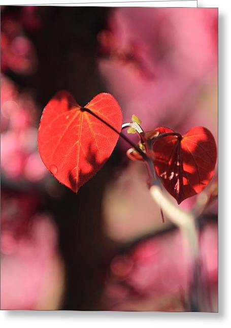 Greeting Card featuring the photograph Redbud In Spring by Scott Rackers