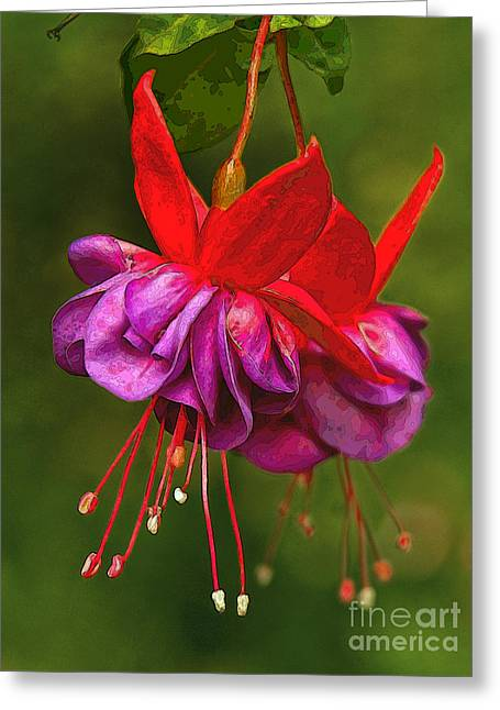 Redpurple Flower Greeting Card