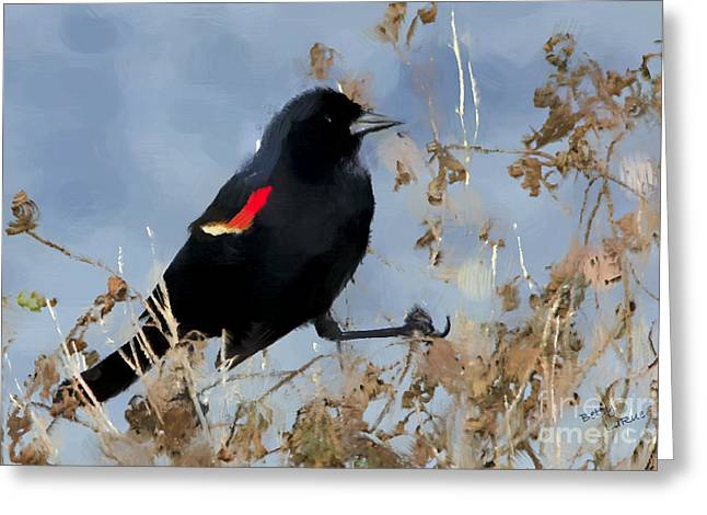 Redwing Blackbird Greeting Card by Betty LaRue