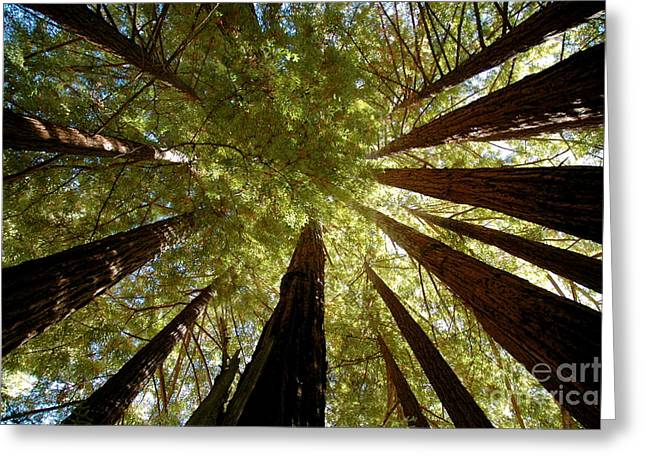 Greeting Card featuring the photograph Redwood Canopy by Johanne Peale